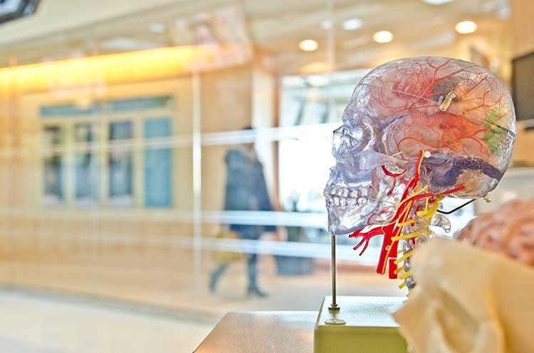 Wizualizacja czaszki i szyi