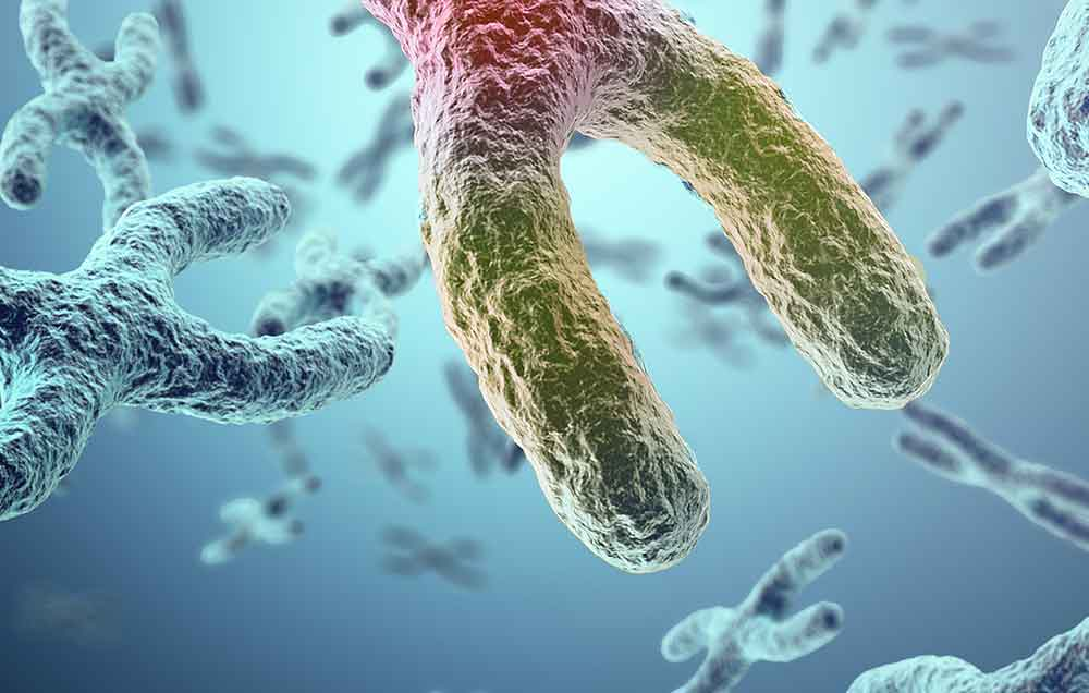 Stan zapalny – gdy trwa wystarczająco długo – może skracać telomery, a z telomerami – życie.