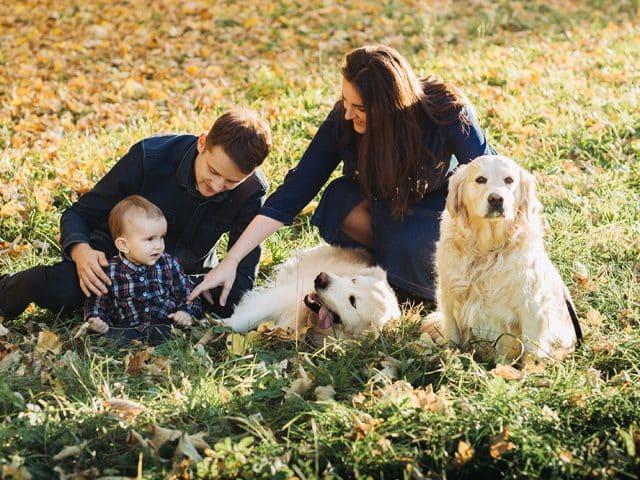 Zwierzęta domowe – w jaki sposób wpływają na zdrowie właściciela?