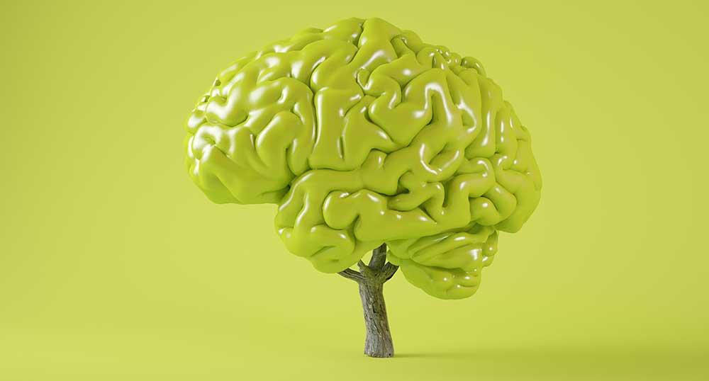 Wpływ kreatyny na pamięć i koncentrację