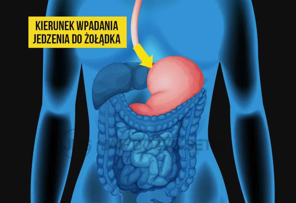 Jak jedzenie wpada do żołądka?